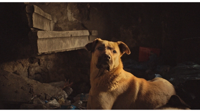 A still from 'Stray'. A blonde dog is laying on the floor of what looks like an abandoned house, covered in rubble. His head is raised and he is craning his neck towards the camera. He has short ears and a dark snout.